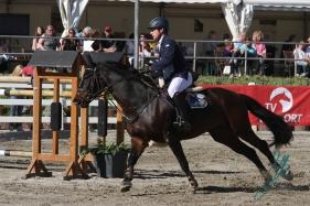 Qualifikation zum Bundeschampionat der jungen Springpferde (Foto: Jenny Musall)